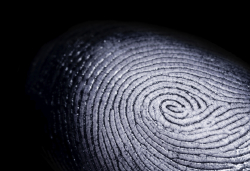 single fingerprint